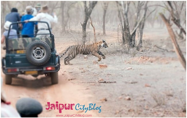 Ranthambore, Things to Do in Ranthambore
