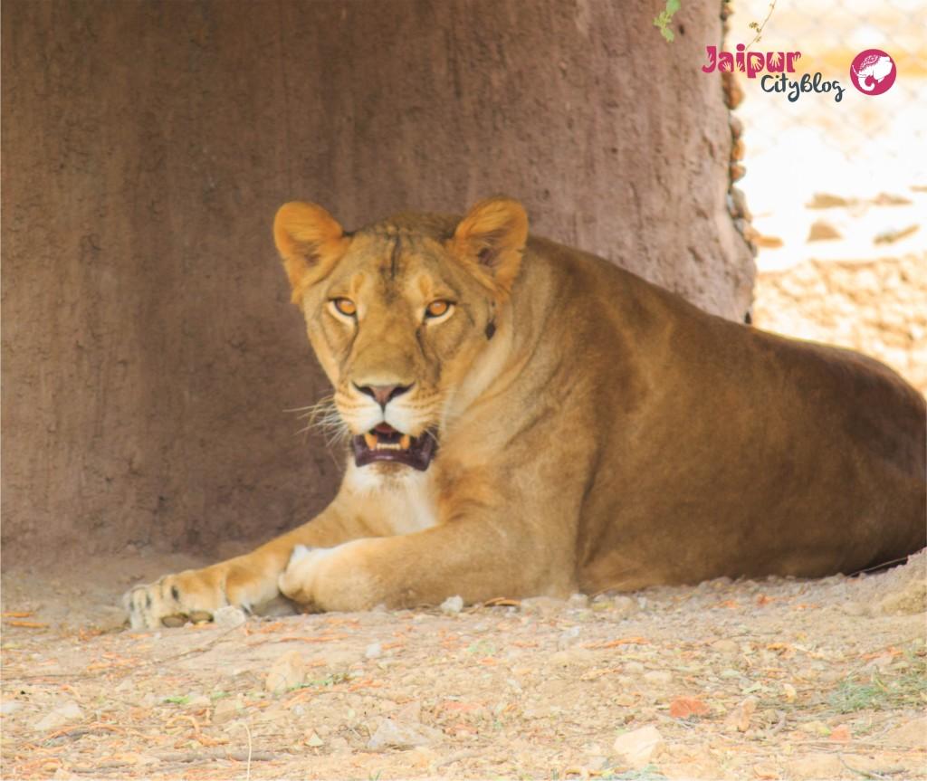 Nahargarh Biological Park