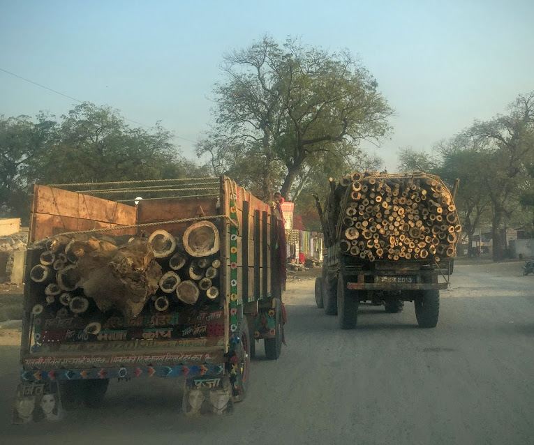 deforestation in jaipur