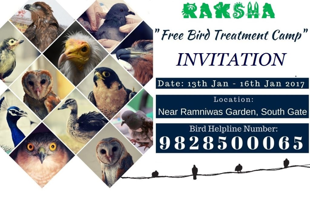 bird helpline in jaipur